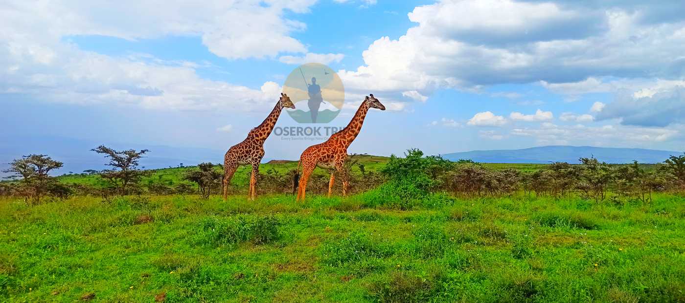Day Trip to Arusha National Park